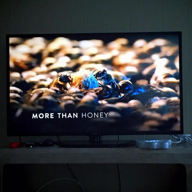 Lazy Sunday documentary bees nw